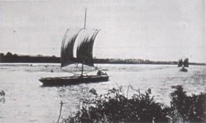 農樹通信 五平太船
